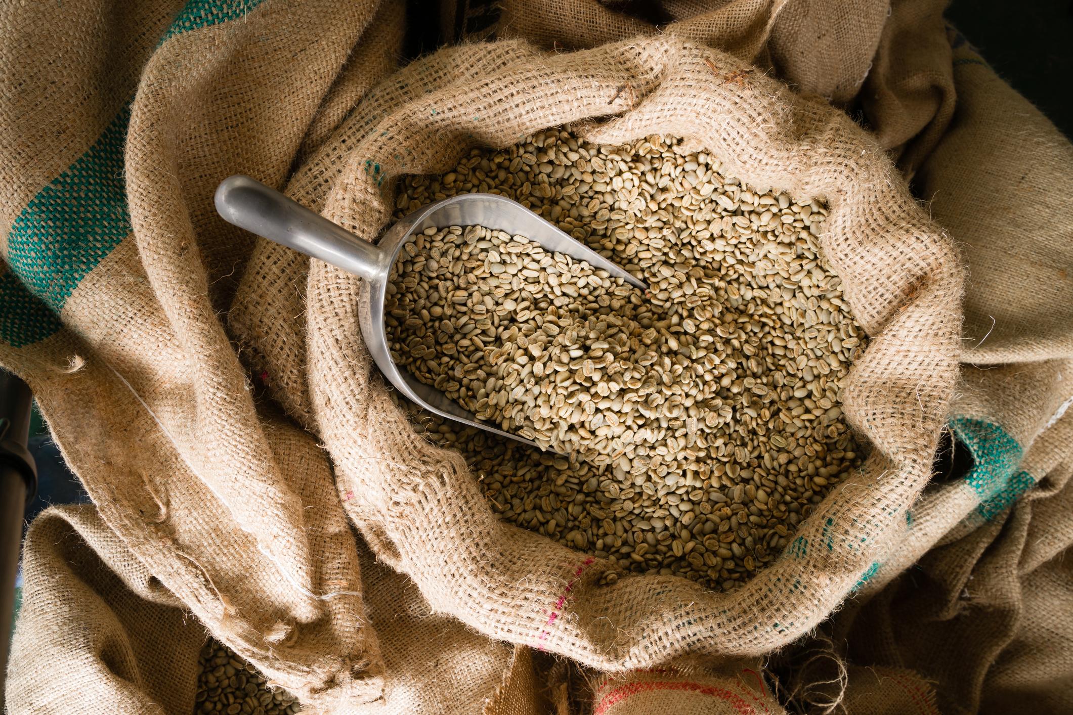 Groene koffiebonen klaar om geroosterd te worden